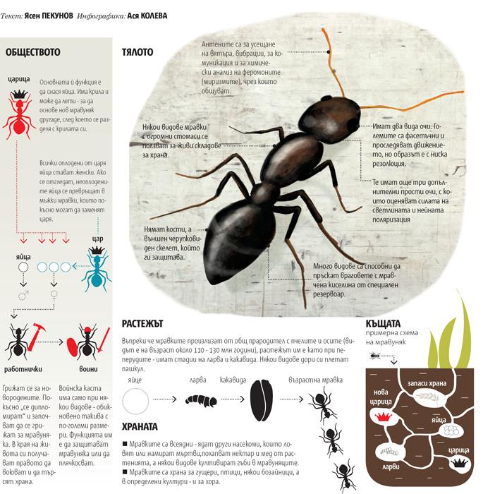infographics/22